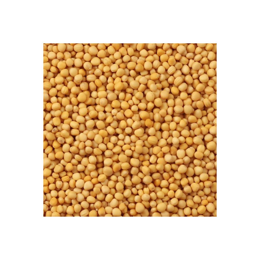 семена горчицы для почвы